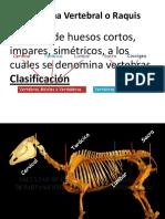 vertebras 1.pptx