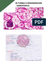 Imagenes Practicas Patologia- 2015-i