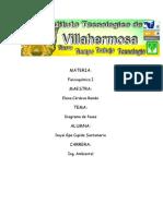 Diagrama_de_fases.docx