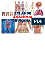 atlas de anatomia humana.pdf