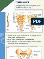 huesosacro-121006132807-phpapp02.pptx