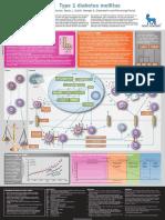 Type 1 diabetes mellitus POSTER.pdf