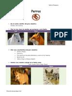 perros- Especialidad.pdf