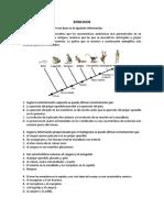 Ejercicios cladogramas