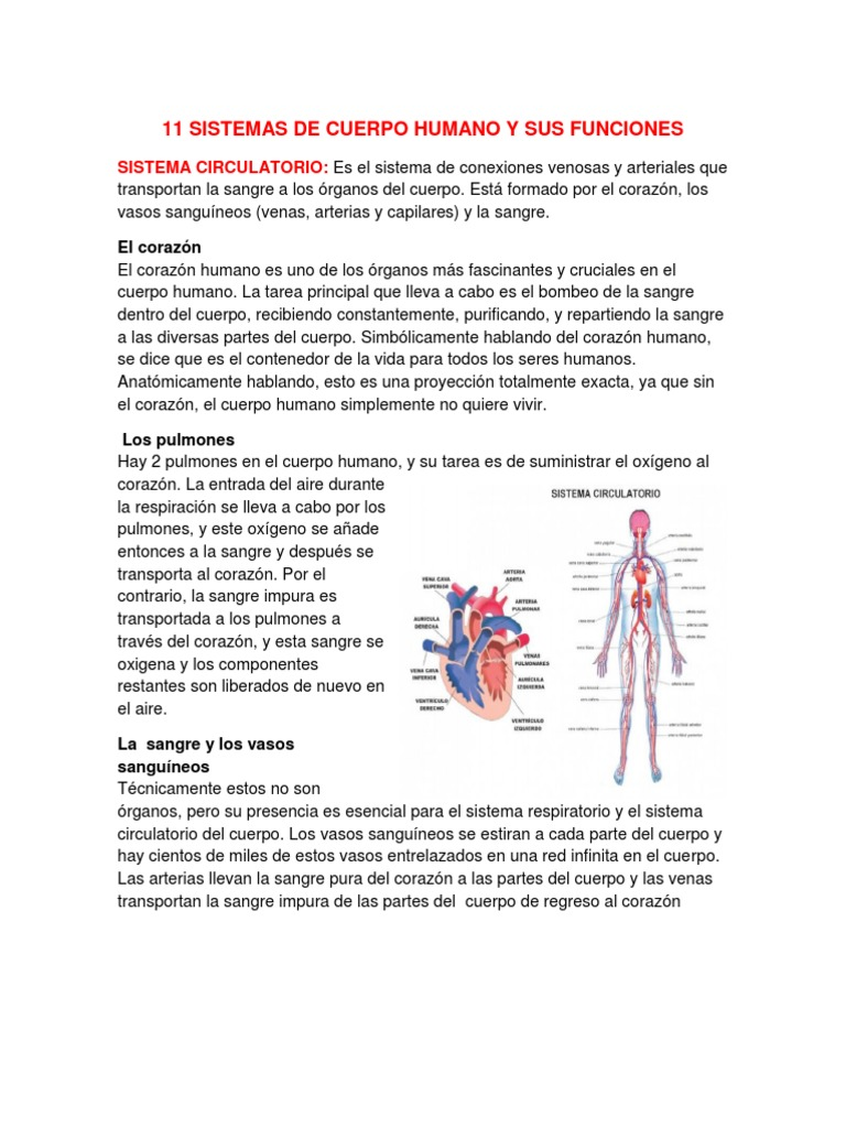 11 Sistemas de Cuerpo Humano y Sus Funciones y Organos