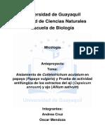 Aislamiento de Colletotrichum Acutatum en Papaya (2)