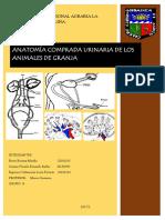 AVANCE 2 Anatomiacomparadaurinariadelosanimalesdegranja MesaVACUNOS GrupoG. 3 (1)