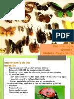 entomologia-140108210817-phpapp02.pptx