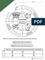 Los Ecosistemas Cadena Trófica Actividades