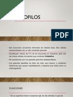 BASOFILOS y EOSINOFILOS.pptx