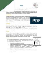 Informe Neuropsicología Final