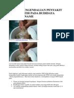 Teknik Pengendalian Penyakit Berak Putih Pada Budidaya Udang Vaname