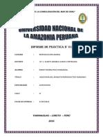Informe Aparato Reproductor Hembra Vaca y Marrana