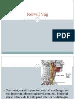 pr 1 nervul vag