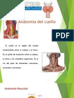 presentacion anatomia del cuello  1