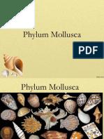 molluscs new.ppt