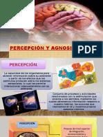 Percepción y Agnosias