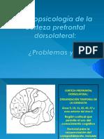 Neuropsicología de La Corteza Prefrontal Dorsolateral