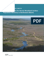 Alberta committee releases draft recommendations report on plan for recovery of boreal woodland caribou population recovery