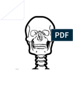 Esqueleto Humano en Partes