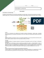 guìa plantas