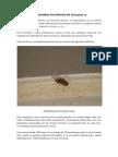 Cromosomas Gigantes en Drosophila Sp