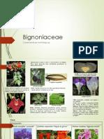 Familia Bignoniaceae