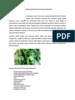 Materi Obat Herbal