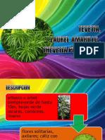 Tevetia, Laurel Amarillo
