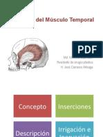 Anatomía Del Músculo Temporal