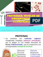 Proteínas -Niveles 2 Ok