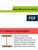 ANAT_unit 4_skeletal Muscle Anatomy Notes