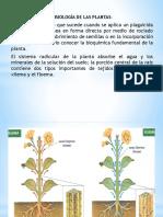 Quimia Ambiental