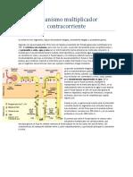 mecanismo multiplicador contracorriente