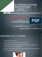 anatomiadelaringe-120517183325-phpapp02