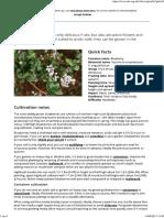 Blueberries_RHS Gardening.pdf