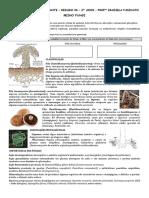Reino Fungi Resumo 2017