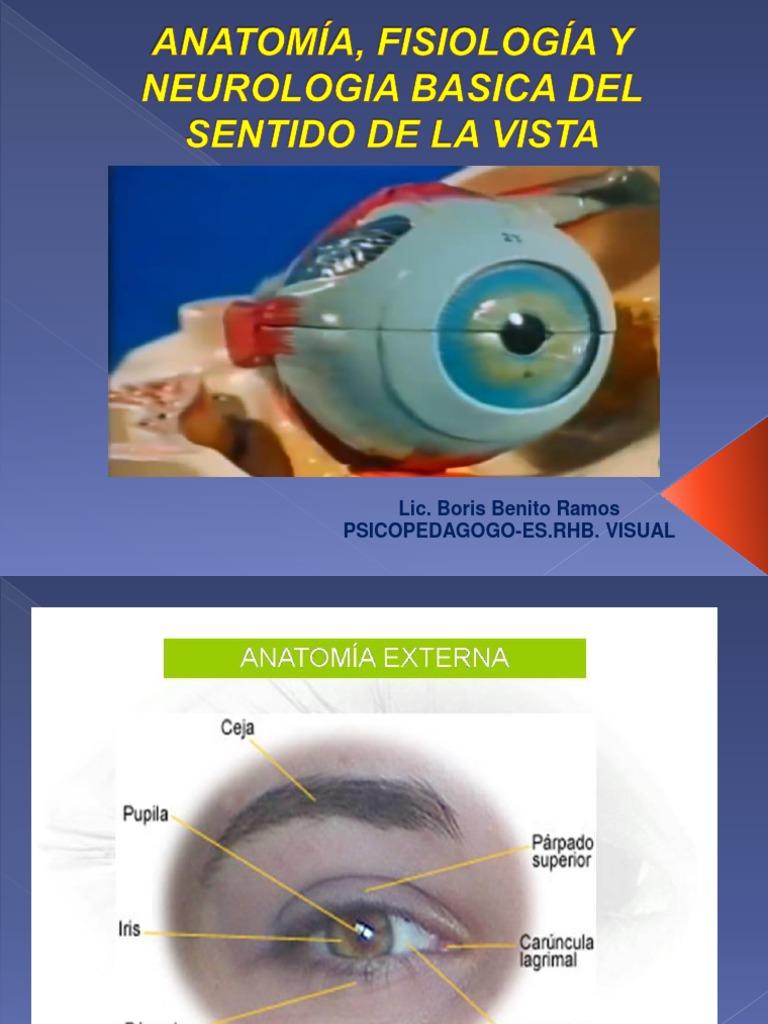 1.- Anatomia, Fisiologia y Neurologia Del Sentido de La Vista
