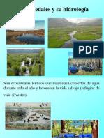 Hidrología de Humedales