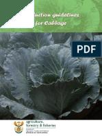 Prod Guide Cabbage.pdf