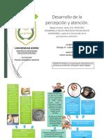 IEXPRO-MAESTRIA-NEE-Mapa Mental Desarrollo de La Percepción y de La Atención.-zelTZIN-AVILA