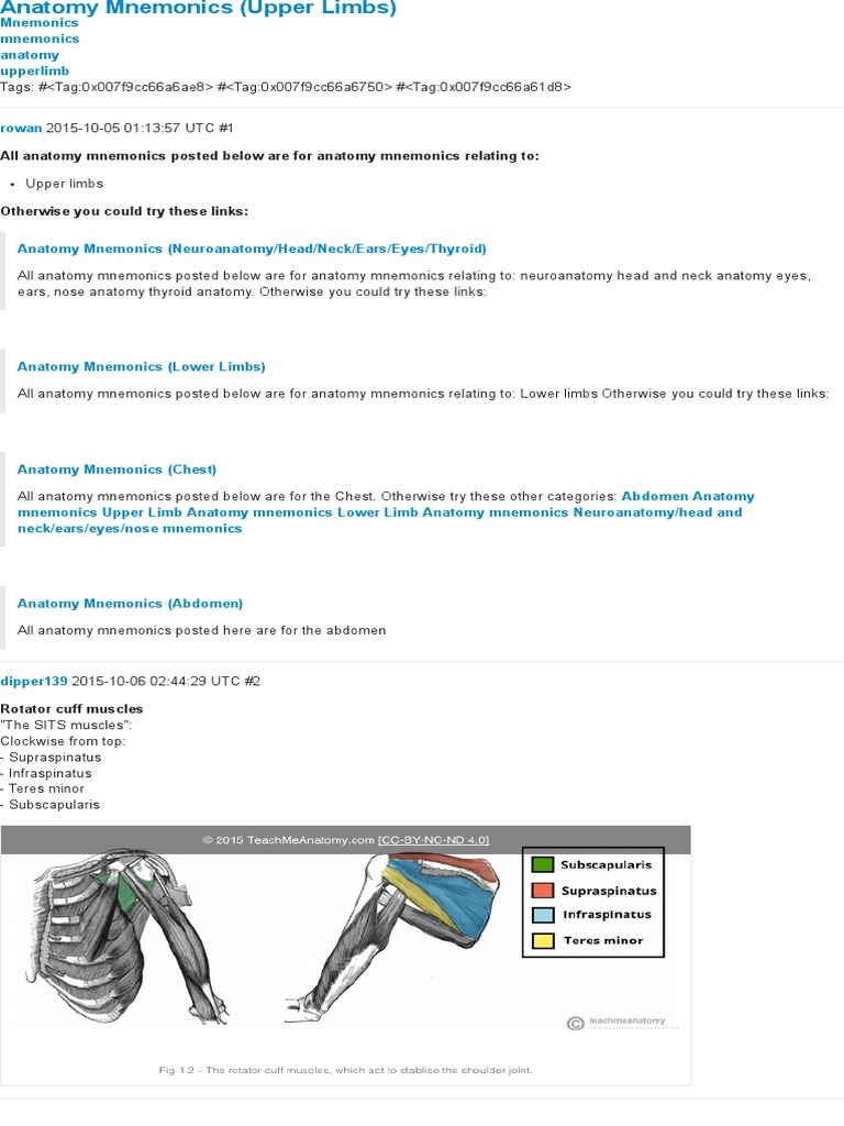 Colorful Anatomy Mnemonics Muscles Elaboration Human Anatomy