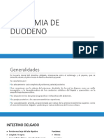 Anatomia de Duodeno