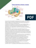 Funciones cerebrales superiores.docx