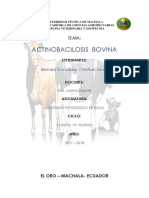 ACTINOBACILOSIS  BOVINA