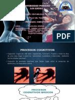 Proc. Cognitivo
