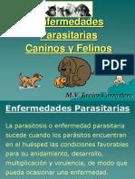 Clase 1 - Cestodos, Nematodos y Atropodos