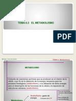 2 Metabolismo Anabolismo y Catabolismo