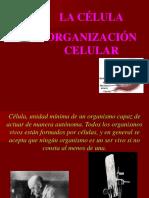 3 La Celula y Su Organizacion