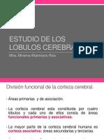 3 ESTUDIO DE LOS LOBULOS CEREBRALES.pptx